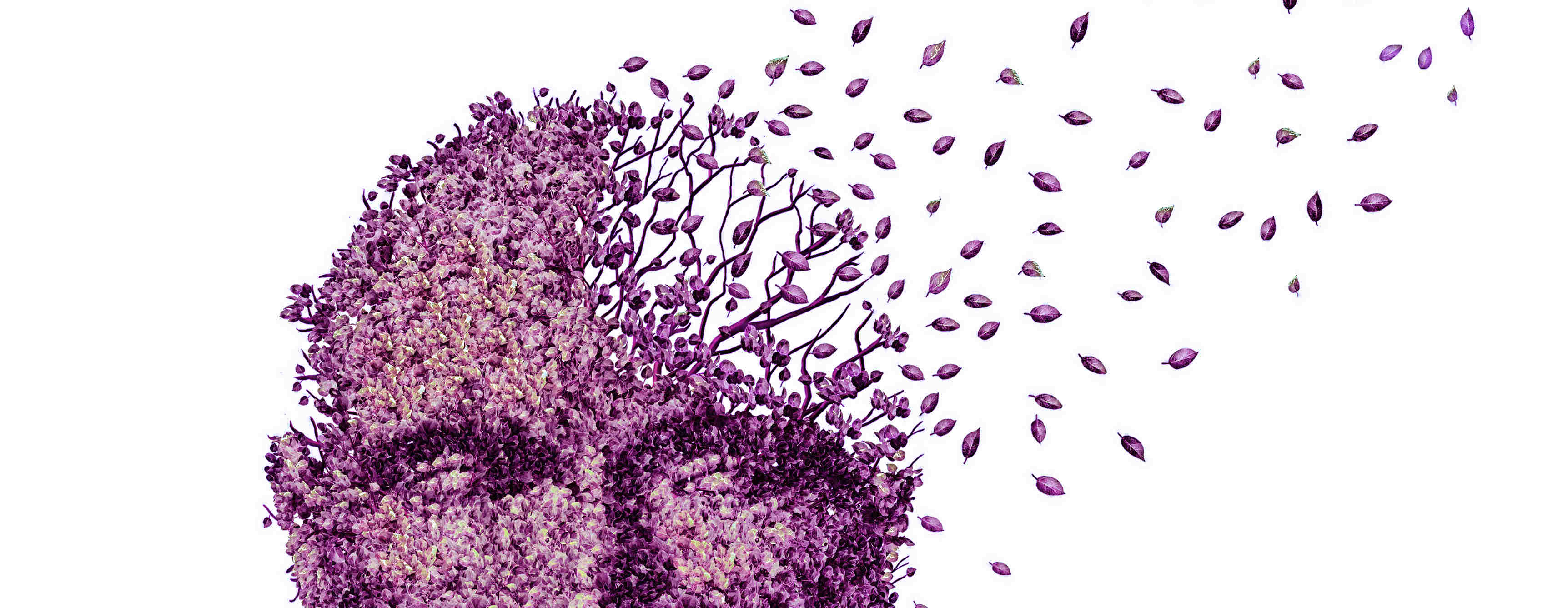 Dementia disease dealing with Alzheimer's illness as a medical icon of a tree in the shape of a front view human head and brain losing leaves as challenges in intelligence and memory loss due to injury or old age.